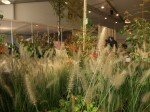 Expozitia Internationala GrootGroenPlus 10