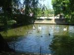 Parcul Herastrau 2
