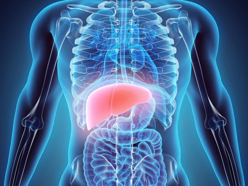 principalul organ de detoxifiere a organismului)